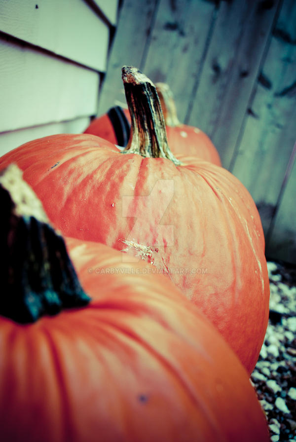 We Got Our Pumpkins by carbyville