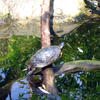 Cute Turtle by carbyville