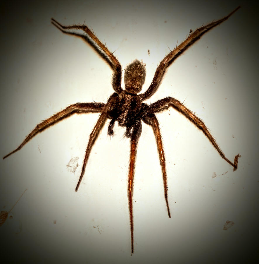 Spider at my wall by Danny-Rammstein