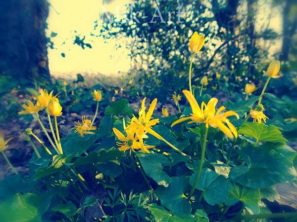 Fleurs jaunes sous-bois by photomik-art