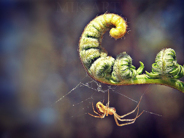 Mini yellow spider by photomik-art