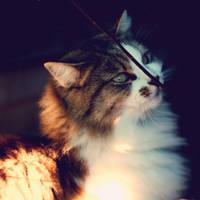 Felidae by thetoxiclizard