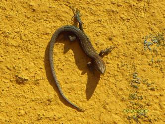 Lizard on the ledge by MarieAngel04