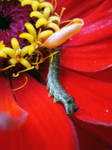 Caterpillar in a Candy Store by dragonkat