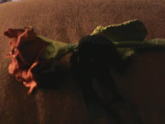 PotO Rose Detail