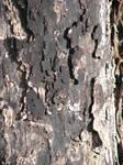 Dark Bark 2