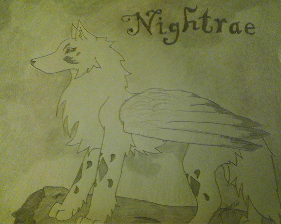 Nightrae Cover by Xyliaz