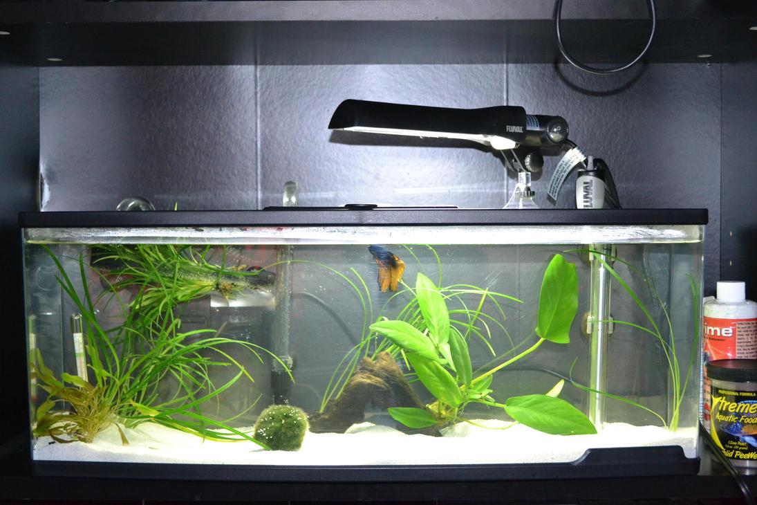 Ideal betta setup by notoriousbunny on deviantart for Fish tank heater petco