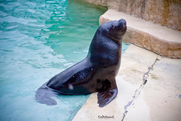 seal by backatone