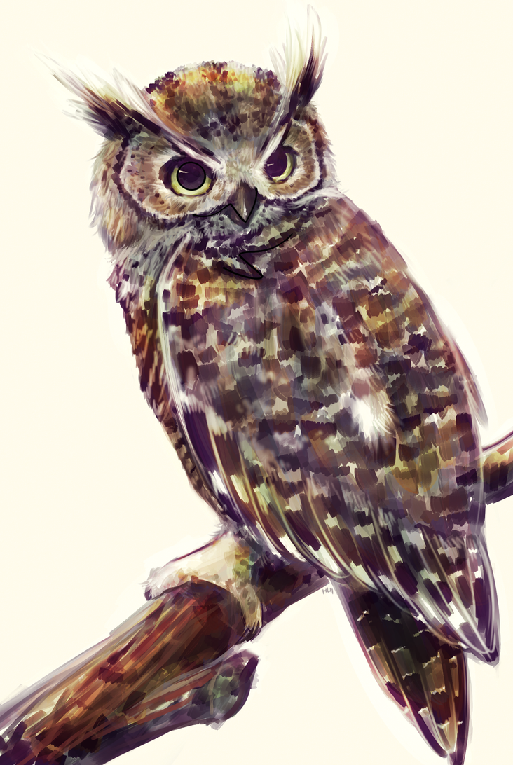 Hoot by Haychel