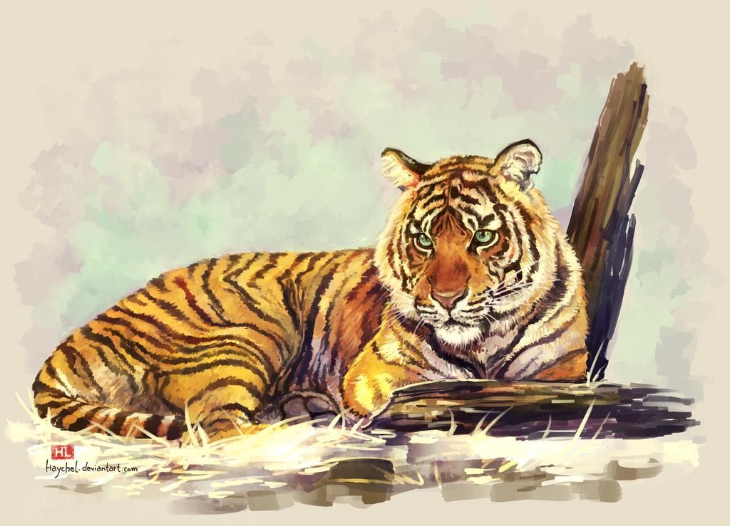 Stripes by Haychel