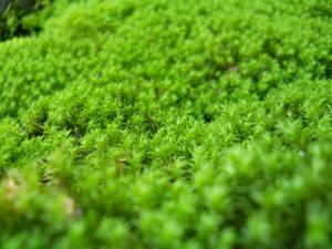 Mossy plains