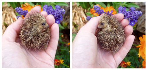 Hedgehog SCULPTURE by pixiwillow