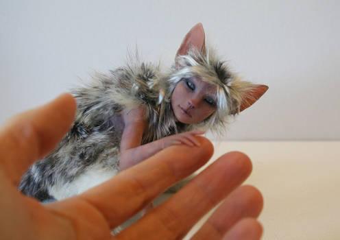Silver Tabby
