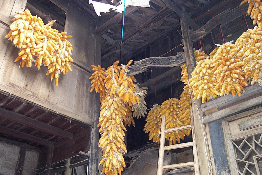 Corns at home by niteangel