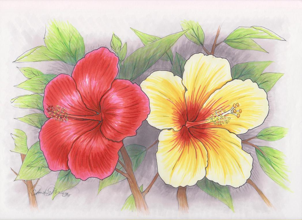 Hawaiian Flower Line Drawing : Hawaiian flowers by talonclawfange on deviantart