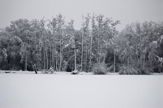 Lakeside Snowscape