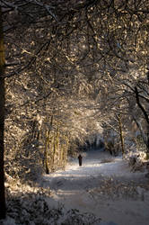 Seasons - Looking forward