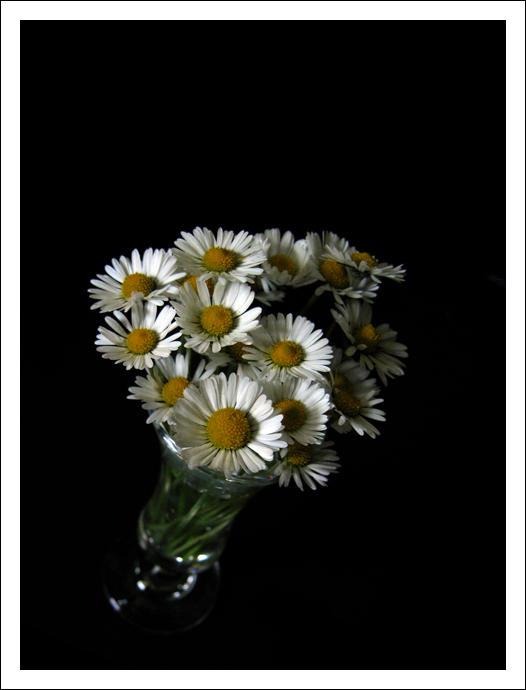 Flowers seeking the light... by trutruche