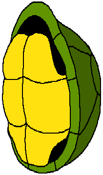 Cartoon Turtle Shell by XxRobotChaoxX