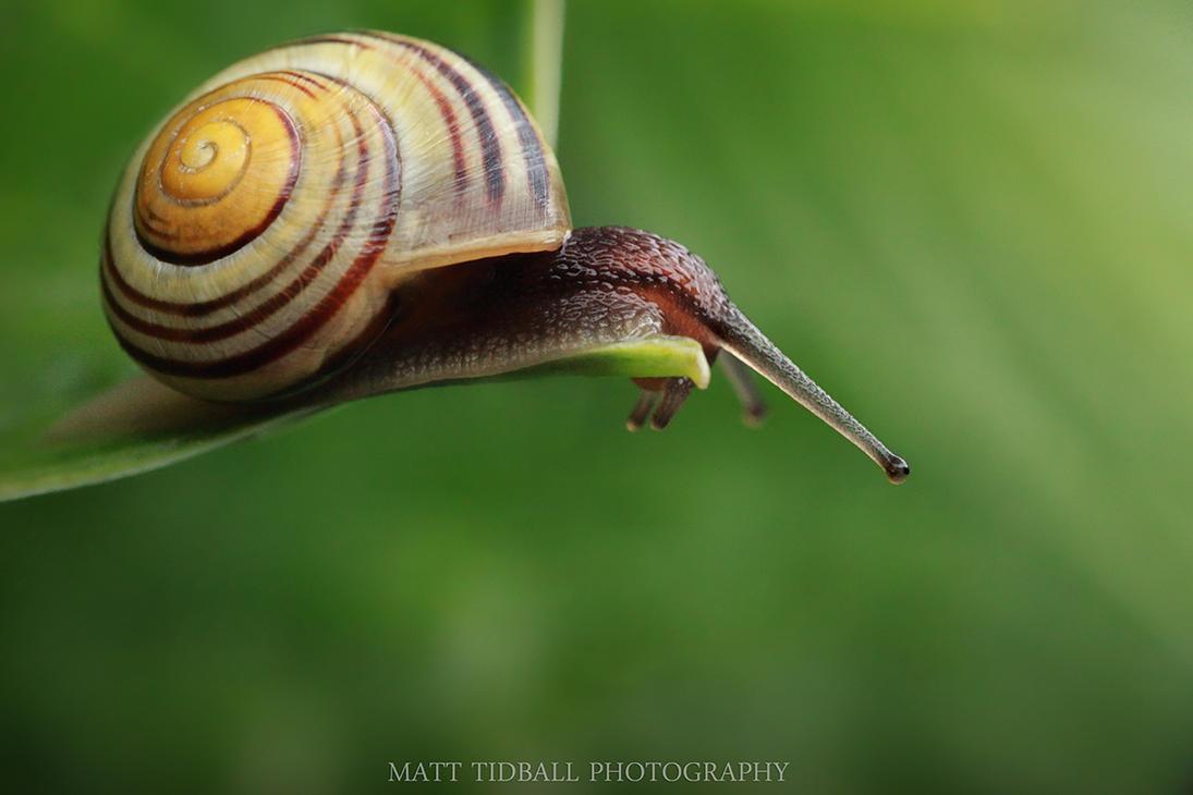 Snail by mattTIDBALL