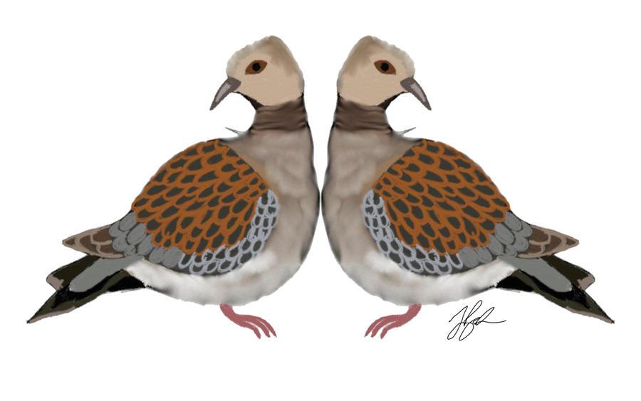 free clip art turtle doves - photo #10