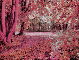 Pink bliss by JillySB
