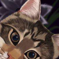 A cat named Curiosity by JillySB