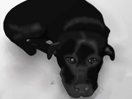 Black Dog by JillySB