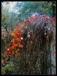 Autumn harmony by Luthyen