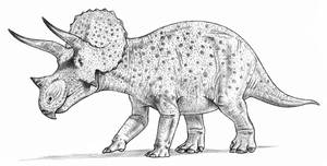 Triceratops by dewlap