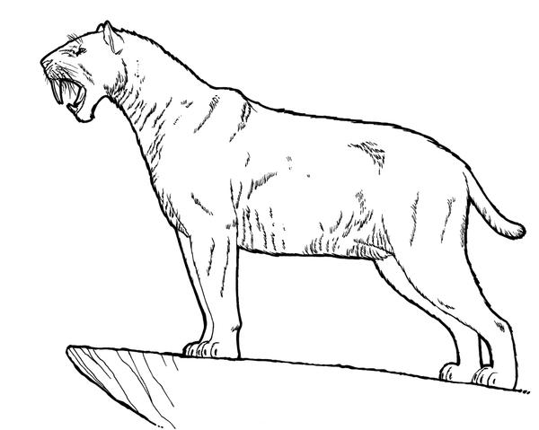 saber tooth coloring pages | Smilodon by dewlap on DeviantArt