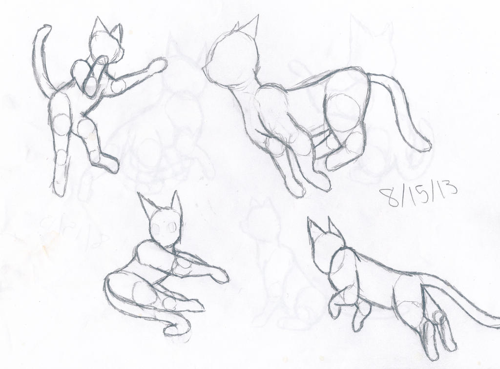 cat anatomy practice 1 by thelongdreamer on DeviantArt