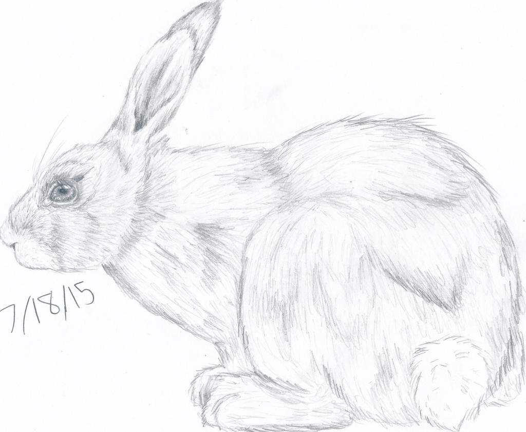 bunny by thelongdreamer