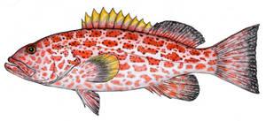 Scientific Illustration 441