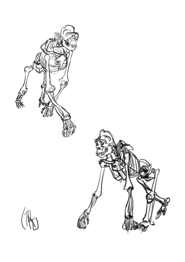 Gorilla Anatomy by ciromasamune on DeviantArt