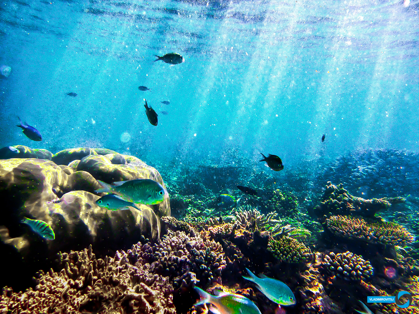 Coral colour by aradosman