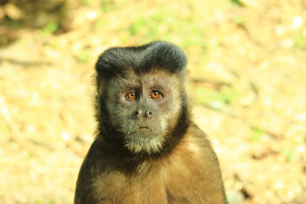 Monkey VIII by jimmyogotico