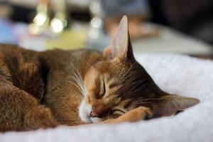 Good Dreams by panna-cotta