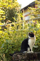Country Garden by panna-cotta