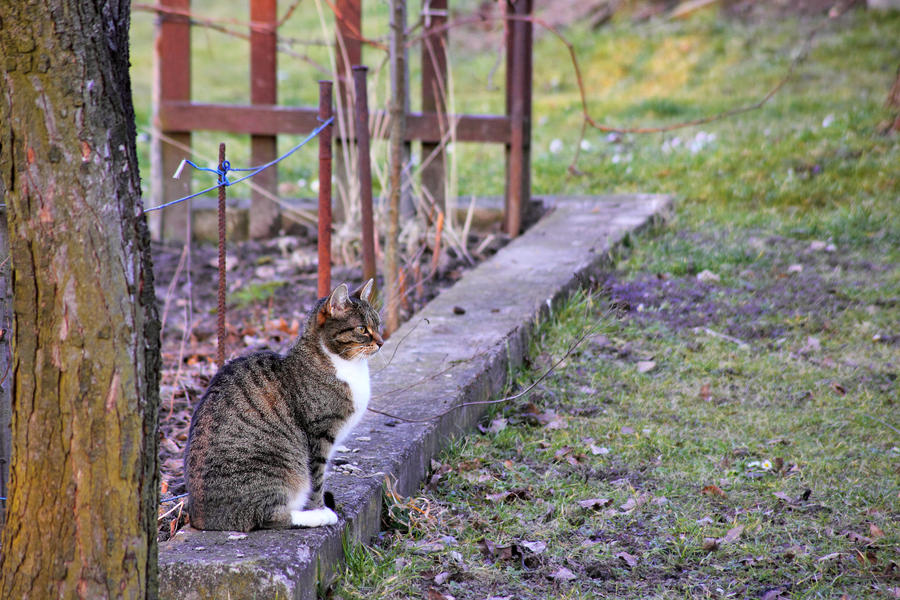 Early Spring Cat by panna-cotta