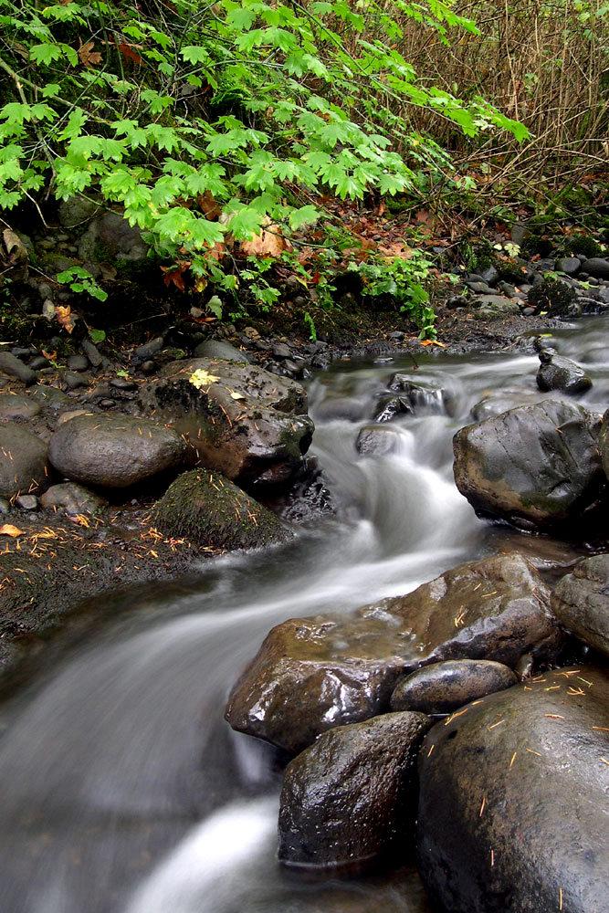 Beaver Creek by strangledbyart
