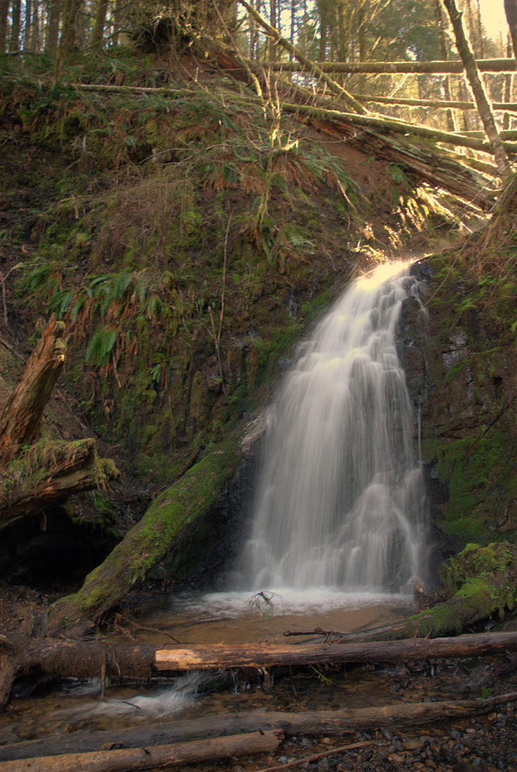 Fern Rock Falls by strangledbyart