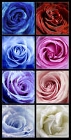 A collection of roses