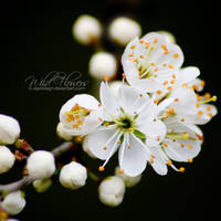 Wild Flowers by eyedesign