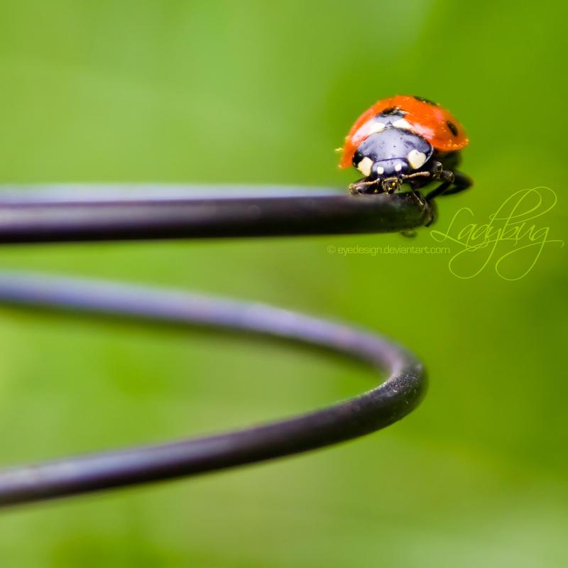 Ladybird by eyedesign - u�ur b�cekli avatarlar