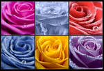 Collection of Roses II