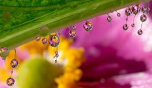 Anemone dewdrop refraction by needcaffine