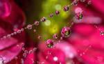 Cobweb dewdrop flower refraction