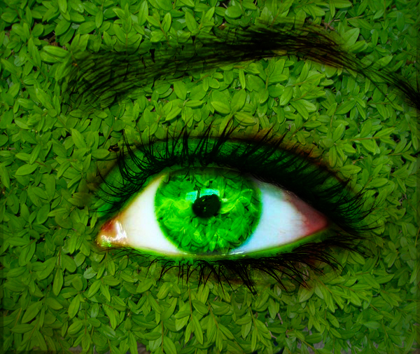 http://fc00.deviantart.net/fs70/f/2010/152/d/5/green_nature_eye_by_mu6.jpg